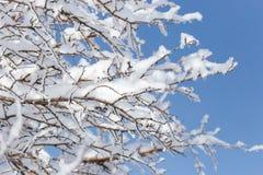 Schneien Sie auf den Niederlassungen eines Baums gegen den blauen Himmel Lizenzfreies Stockfoto