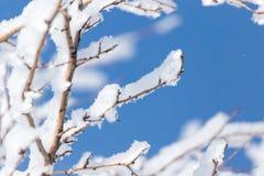 Schneien Sie auf den Niederlassungen eines Baums gegen den blauen Himmel Lizenzfreie Stockfotografie