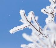 Schneien Sie auf den Niederlassungen eines Baums gegen den blauen Himmel Lizenzfreie Stockfotos