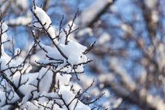Schneien Sie auf den Niederlassungen eines Baums gegen den blauen Himmel Lizenzfreie Stockbilder
