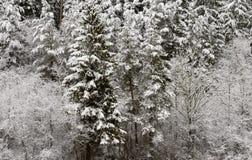 Schneien Sie auf hölzernen Bäumen in der Landschaft nahe Engen, Deutschland Lizenzfreies Stockfoto