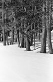 Schneien Sie zwischen den Bäumen an einem hellen Wintertag lizenzfreies stockfoto