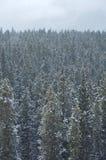 Schneien in Wald 02 Lizenzfreie Stockfotografie