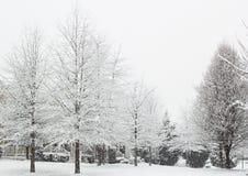 Schneiender Baum Stockfotos