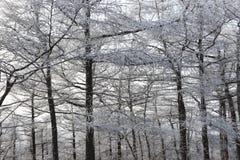 Schneiender Baum im Winter Stockbild