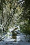 Schneise in einem schneebedeckten Wald Stockfoto
