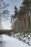 Schneise im Winter bei Glen Feshie in den Hochländern von Schottland stockfoto