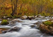 Schnell fließender Fluss auf dem Hintergrund des Herbstwaldes Stockfotografie