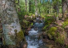 Schnell fließender Gebirgsabfluss-Strom Lizenzfreie Stockfotografie