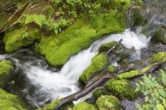 Schneller Bach, der in die Spur des Bergs Carleton läuft, in dem der Boden durch Moos und Gras umfasst wird lizenzfreie stockfotos