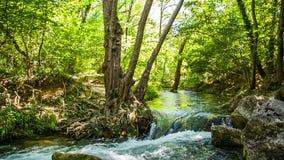 Schneller Fluss des Flusses im Wald stock video footage