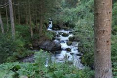 Schneller Fluss durch den Wald im Alpenberg Stockbild