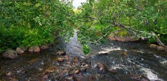 Schneller Waldfluß Lizenzfreie Stockbilder