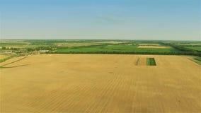 Schnelles Fliegen über gelbem Feld stock footage