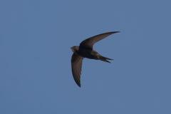 Schnelles Fliegen obenliegend Stockbild