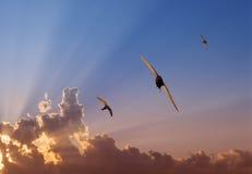 Schnelles Trio am Sonnenuntergang Lizenzfreie Stockfotos