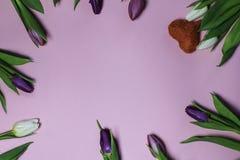 Schöner Blumenstrauß von purpurroten Tulpen auf rosa Hintergrund Stockbild
