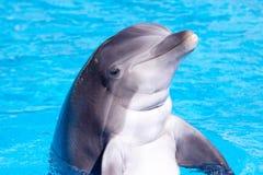 Schöner Delphin im Wasser Stockfotografie
