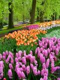 Schöner Frühlingspark Stockbilder