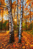 Schöner Herbstmorgen im Park mit weichem goldenem Licht Lizenzfreies Stockfoto