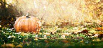 Schöner Kürbis über Falllandschaft mit Rasen, Bäumen und Laub Herbst, der Naturkonzept erntet Lizenzfreie Stockbilder