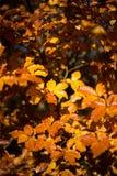 Schöner Morgen im nebelhaften Herbstwald mit Sonne strahlt aus Stockfotos