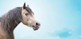 Schöner Pferdekopf des Grauschimmels auf Hintergrund des blauen Himmels Stockfoto