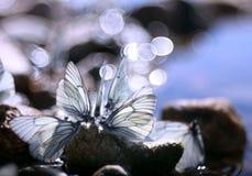 Schöner Schmetterling auf den Felsen nahe dem Wasser, Natur, Frühling Lizenzfreies Stockfoto