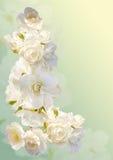 Schöner vertikaler Rahmen mit einem Blumenstrauß von weißen Rosen mit Regen fällt Stockfotografie