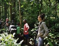 Schönes Mädchen mit Gruppe Touristen im Dschungel nahe durch Mondica-Lager Das Grenzland zwischen dem Kongo und dem zentralafrika Lizenzfreies Stockbild