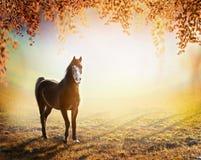 Schönes Pferd steht auf sonniger Herbstwiese mit hängenden Niederlassungen von Bäumen mit buntem Laub Stockbild
