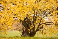 Schönheit, die Rest unter enormem Herbstgelbbaum hat Einsame Frau, die Naturlandschaft im Herbst genießt Nebel auf dem Feld Mädch Lizenzfreies Stockbild
