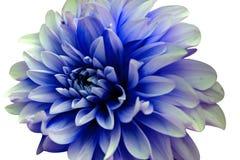 Schnitt der Blume auf wei?em Hintergrund lizenzfreies stockbild
