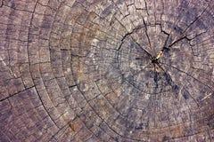 Schnitt des alten trockenen Baums Stockbild