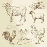 Schnitt des Fleisches - Lamm, Huhn Stockfotografie