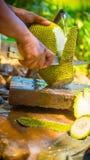 Schnitt des frischen Jackfruit stockfotografie