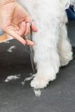 Schnitt des Haares auf dem hinteren Fuß des Hundes lizenzfreies stockfoto