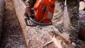 Schnitt durch Holz mit Kettensäge in der Zeitlupe stock footage