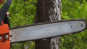 Schnitt durch Holz mit Kettens?ge in der Zeitlupe stock video