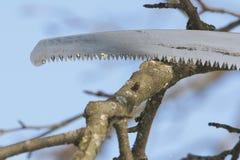 Schnitt eines Baums 1 Stockfoto