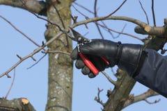 Schnitt eines Baums 3 Stockbild