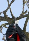 Schnitt eines Baums 4 Stockfoto