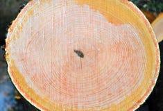 Schnitt eines Baums lizenzfreie stockfotos