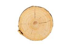 Schnittansicht des Baums Stockfoto