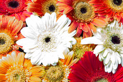 Schnittblumen Stockfotos