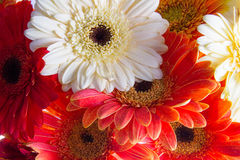 Schnittblumen Stockfotografie
