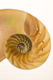 Schnittschnitt eines Nautilusshells Lizenzfreies Stockbild