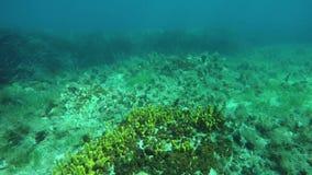 Schnorcheln über Meeresgrund stock video