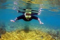 Schnorcheln auf Great Barrier Reef Stockbilder