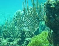 Schnorcheln in Bahamas Coral Reef Lizenzfreie Stockfotos